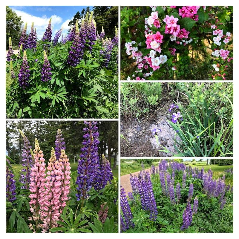 June Flowers in Sackville Waterfowl Park